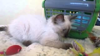 Nikita, Rescue kitten, Murcia, Spain