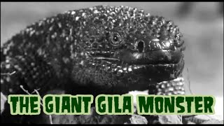 The Giant Gila Monster - horror movie 1959 (widescreen, complete)