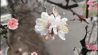 Весенние зарисовки. Просто природа. / Spring. Nature. / Весняні пейзажі.