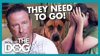Father Threatens to Get Rid of 'Stupid' Family Dogs | It's Me or the Dog