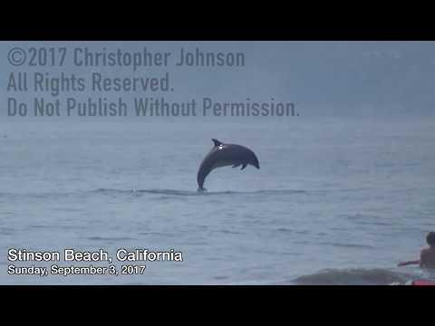Stinson Beach Dolphins