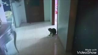 Giocando a calcio con la gatta Maia - Playing football with Maia the Cat
