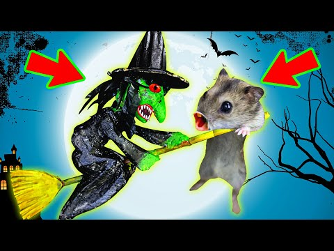 🎃🧛‍🐹 HALLOWEEN WITCH Hamster Obstacle Course Maze With Traps 😱 + BATS