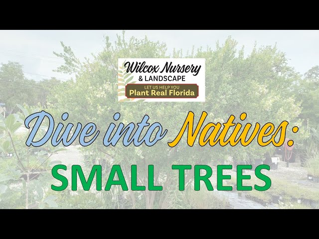 Dive into Natives: Small Trees