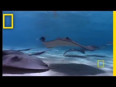 Stingray City | National Geographic