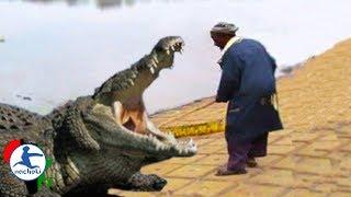 Baixar Top 10 Deadliest Animals Found in Africa