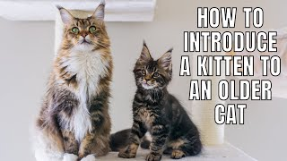 5 Tips on Introducing a Kitten to an Older Cat