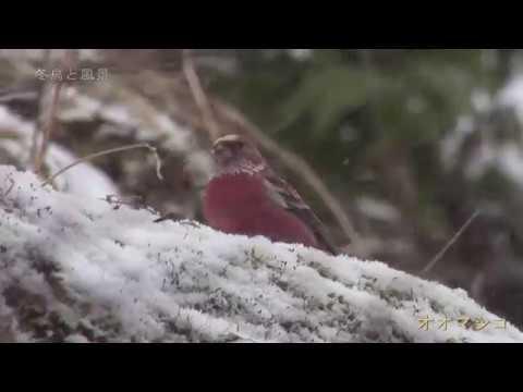 【冬鳥と冬風景】