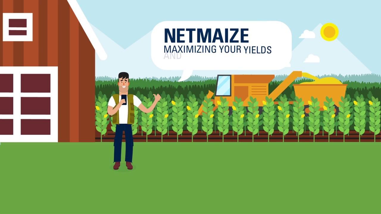 Increase Corn Yield Using Drip Irrigation | Netafim
