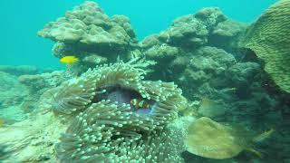 Scuba Diving | Andaman and Nicobar Islands