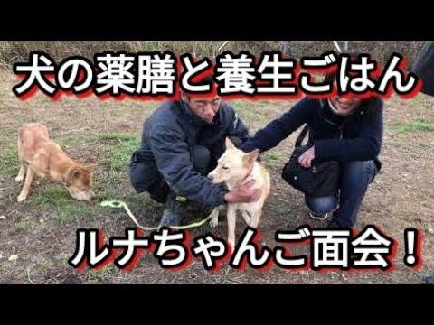【犬の薬膳と養生ごはん】ルナちゃんご面会 Dog Rescue A&R
