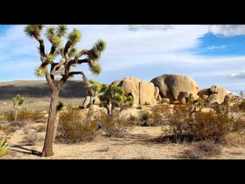 Sounds of the Mojave Desert - Wind Through Tree