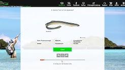 Was ist die Fishing-King Online Akademie? | Fishing-King.de