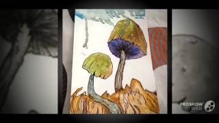 Psilocybe mairei - fungi kingdom