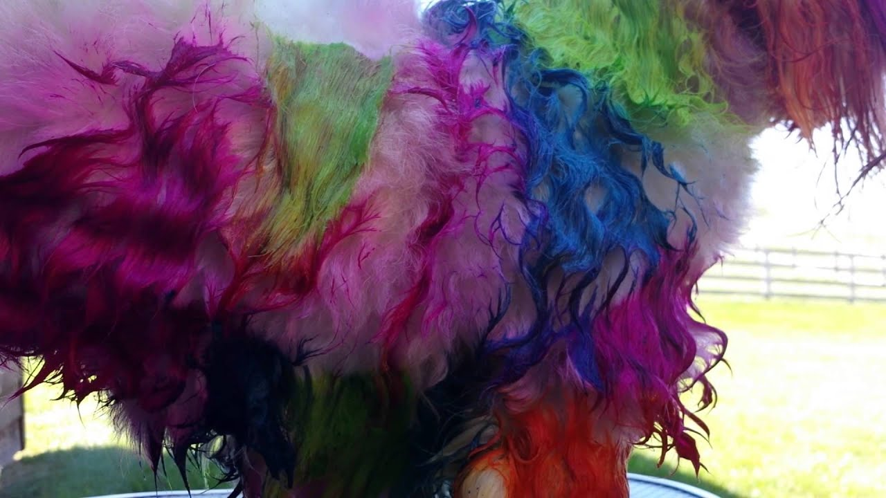 How To Dye Your Dog With Koolaid Manic Panic And Food Coloring Part