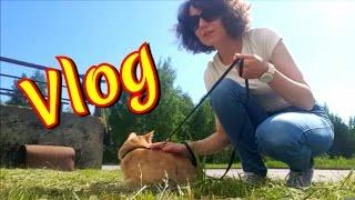 #ВЛОГ! Тащу кота на прогулку! 24.05
