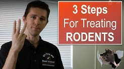 Rodent Control in 3 Easy Steps