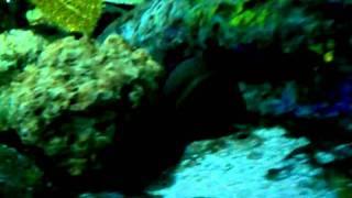 Myrtle Beach Aquarium - Eel Tank
