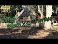 Phana, Thai Monkey Forest - Thailand 4K Travel Channel