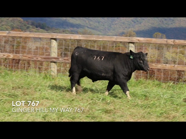 Ginger Hill Angus Lot 767