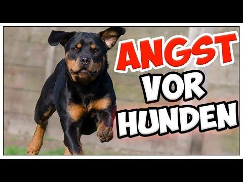 Angst vor Hunden! Hundephobie / Kynophobie / Canophobie behandeln! Angst vorm Hund verlieren!