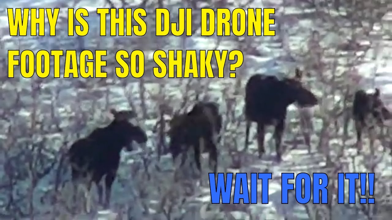 WAIT FOR IT!! Moose caught by DJI Matrice 210 Drone