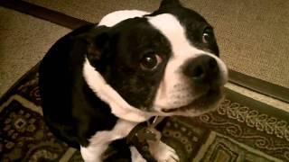 Please, PLEASE give me that hamburg and rice!