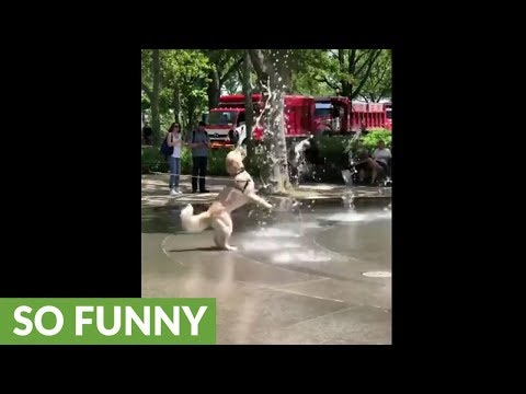 Happy dog plays in shooting water fountain