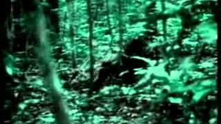 O Macaco-Homem - Documentário dublado