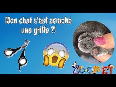 Mon Chat S'est Arraché Une Griffe !
