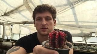 Зимовка кактусов и других суккулентов