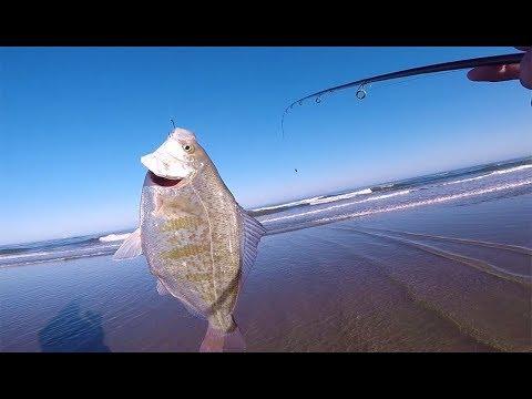 Oregon Surf Fishing - Catching Big Surf Perch