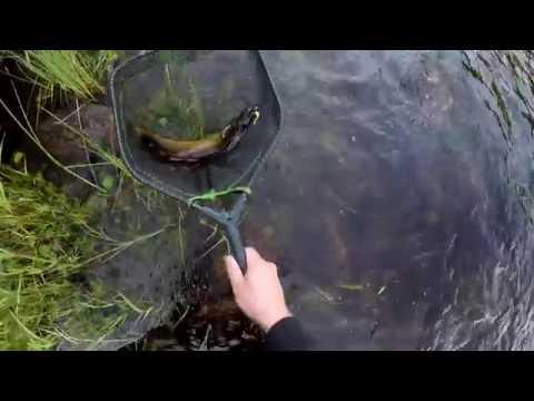 Ruunaan Kosket Kalastus