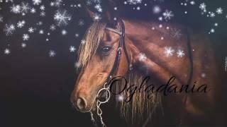 Konie piękne zwierzęta💖#5