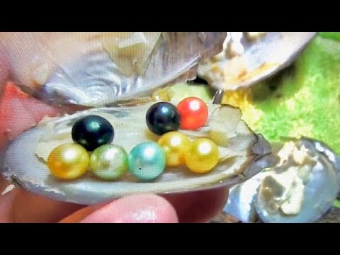 BEST REAL COLORED PEARL  OYSTER DIG IT EVER FOUND!!! ON FUN HOUSE TV