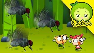 [まめきゅんの昆虫探検#25] 汚いところが好きな昆虫は?【MAMEKYUNN】 thumbnail