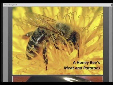 Honey Bee Nutrition