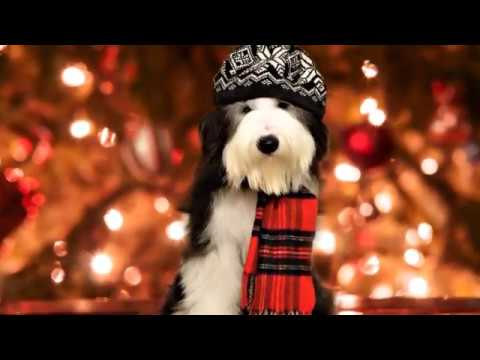 BEARDED COLLIE GREMONTREE - Have youself a merry little Christmas