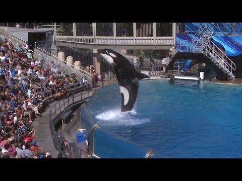 Famous SeaWorld orca Tilikum dies