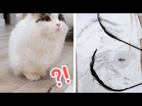 충격! 고양이 장난감에서 색소가 빠져요! 😠 집사님들 꼭 보세요