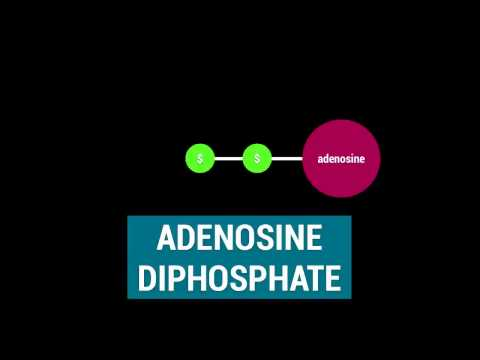 ATP - Adenosine Triphosphate