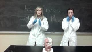 Facial and Mastication Muscles Rap