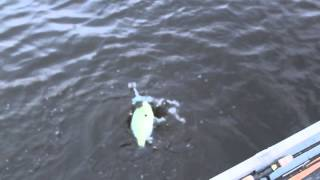 Crappie Fishing in Athens, TX