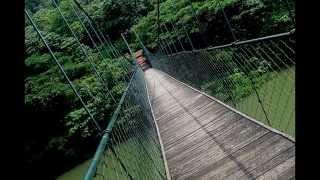 Root Bridges , A Simple Suspension Bridge