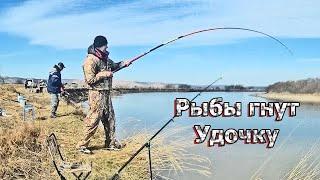 КРУПНАЯ РЫБА ГНЕТ УДОЧКИ И СНОСИТ СПИННИНГИ Дикий осенний ЖОР Рыбалка на красноперку