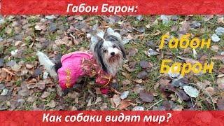 Габон Барон: как собаки видят мир?