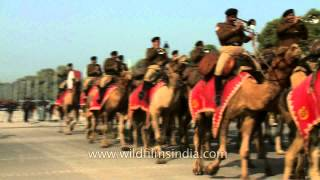 Indian Army band on camel back, at Republic Day
