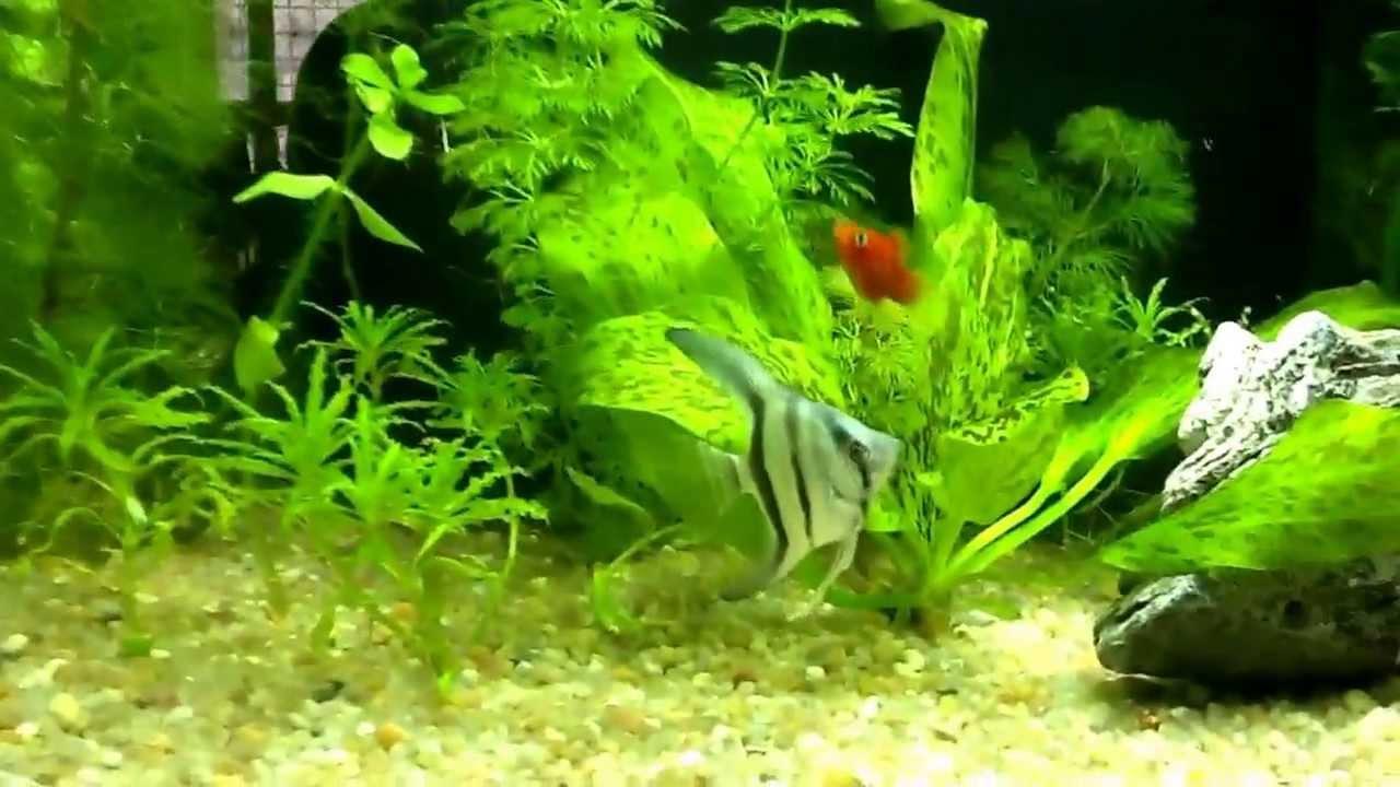 come allestire un acquario d acqua dolce con piante vere: granchi ... - Allestimento Acquario Dolce Con Piante Vere