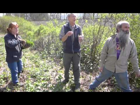 Edible Plants and Mushrooms of the Pacific NW