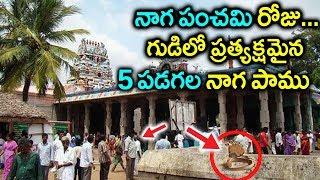 గుడిలో భక్తులకి కనిపించిన ఐదు పడగల నాగ పాము || 5 Headed Snake Near at Nagaraja Temple || Sumantv